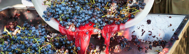 Hoe wordt rode wijn gemaakt